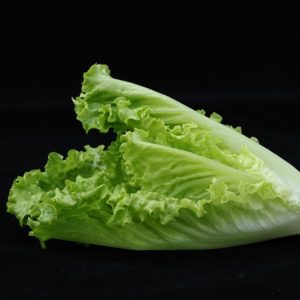 Baby Cos Lettuce